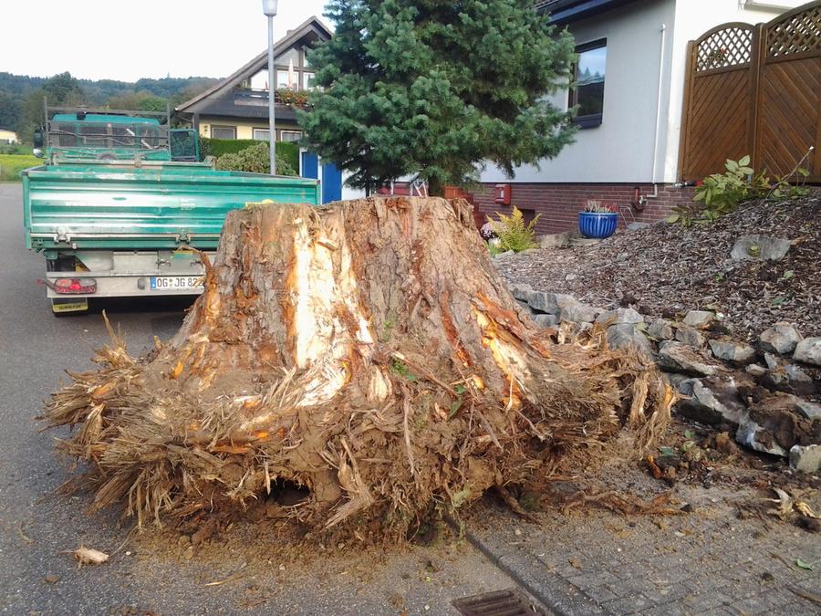 Prächtig Joachim Gass Garten - und Landschaftsbau - Bäume und Wurzeln entfernen @SN_76